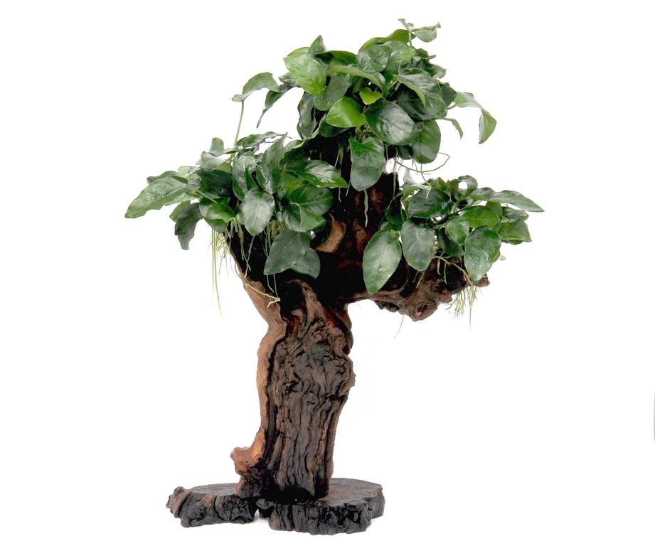Mbuna groß mit Anubias nana Dennerle Aquariumpflanze